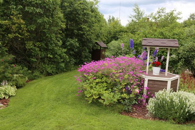 Kaivon vierellä pääsee korkea ja suurikukkainen jalokurjenpolvi 'Patricia' (Geranium-risteymät) oikeuksiinsa. Lisää väriä tuovat jaloritarinkannukset (Delphinium-risteymät). Edessä on tuuhea kasvusto valkokukkaista tarhaniittyhumalaa (Prunella × webbiana).