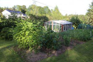 Yläpihalla on vihannesmaata ja kierrätysmateriaalista tehty kasvihuone, jossa viljellään tomaatteja ja kurkkuja.