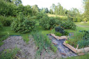 Kasvimaalta on satoa jo korjattu. Taaimmaisessa viljelylaatikossa kasvaa mm. lehtikaalin lähisukulaista mustakaalia.