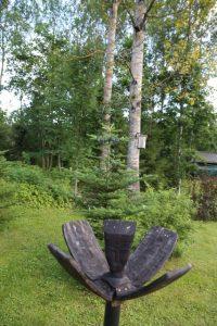 Taiston puutaidetta on useassa kohdassa pihalla. Taustalla liilansinisiä käpyjä tekevä koreanpihta (Abies koreana).