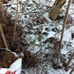 Kun maan pinta jäätyy, arkojen kasvien päälle levitetään kerros talvisuojaukseen tarkoitettua turvetta tai havuja.