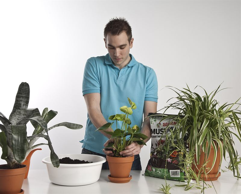 Valo lisääntyy ja kasvit heräävät kasvuun, on aika vaihtaa mullat.