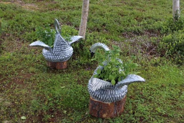 Sirpan askartelemissa joutsenruukuissa kasvaa petunioita.